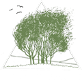 Tree Top Studio